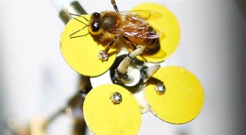 Hoa robot 3D có thể cứu được loại ong quần thể
